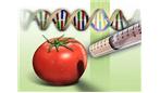 مواد غذایی اصلاح شده ژنتیکی