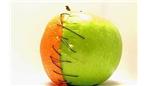 غذاهای اصلاح شده ژنتیکی - خوب یا بد