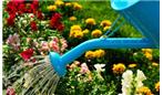 باغ رابطه زناشویی خود را آبیاری می کنید؟