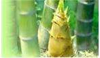 گیاه  بامبو خواصی هم داره؟