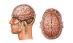 کشیدن سیگار مغز را فرسایش میدهد